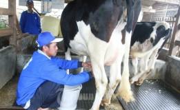 Harga Jual Susu Fresh Di Tingkat Peternak Lokal Kira-Kira Rp5. 000-6. 000 Per Liter.