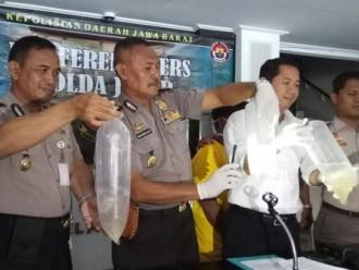 Jual baby Lobster Ilegal, Seorang Nelayan Diamankan Polisi
