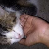 Hadiah Kontan 2 Juta Membawa Kucing Yang Di Cari