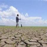 Kekeringan Akibat Musim Kemarau Masih Menghantui Wilayah Lamongan